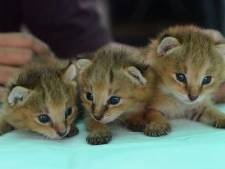 Hagenaar doodt kittens die hij via Marktplaats krijgt