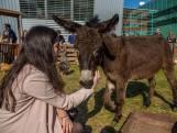 Studenten die dieren knuffelen tegen stress: 'nee, dat moet je niet willen'