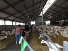 Meer dan 2000 belangstellenden op  Boerenerfdag op geitenhouderij van Combee in Wijk en Aalburg