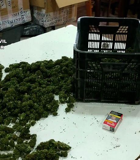 Spaanse politie neemt in twee maanden record van 372.000 cannabisplanten in beslag