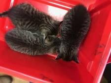 Oproep: Bent u de eigenaar van de kittens die onder de motorkap meereisden van De Kempervennen naar Londen?