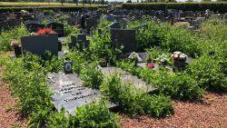 Kerkhoven verliezen strijd tegen onkruid