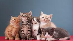 Kan een kattenallergie afnemen door veelvuldig contact met katten?
