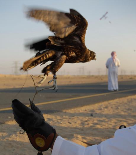Hoe een valkenjacht en een ontvoering Qatar bijna een miljard kostte