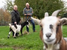 Kinderboerderij in Zevenbergen heeft nieuwe interim-voorzitter