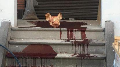 Varkenskop neergelegd aan islamitisch centrum