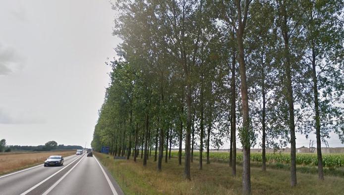 Over de kap van deze duizend populieren oordeelt de Raad van State vermoedelijk nog net voor de zomer. Grofweg de helft van de bomen in de oksel A15-Betuweroute-Van Elkweg gaat vanaf maandag plat.