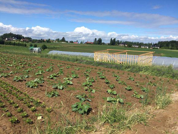 De Zaailing bevindt zich in de opstartfase: het schuurtje is nog in aanbouw, maar de eerste groenten kunnen wel al geoogst worden.