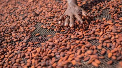 Hoe onze goedkope Mars-repen en KitKats in Afrika nog altijd duur betaald worden