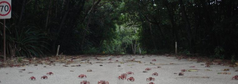 Een still uit de docu Island of the hungry gost Beeld -
