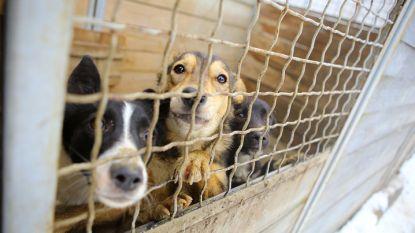 Amerikaans asiel smeekt om hulp: dieren moeten afgemaakt worden als er geen plaats is door orkaan Florence