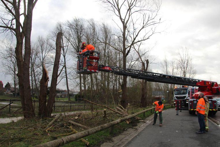 In de Beekkantstraat in Mere brak een stevige boom af.