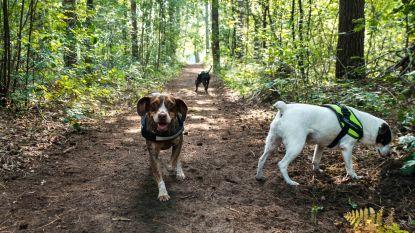 """Overijse schaft als laatste gemeente hondenbelasting af: """"Taks strafte alleen eerlijke inwoners"""""""