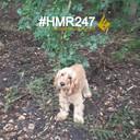 Achtergelaten hond in het bos van Spaarnwouden