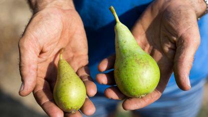Appels en peren zijn kleiner, maar zoeter