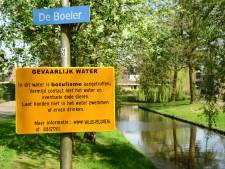 Zwaan broedt stug door bij vieze vijver in Baarn