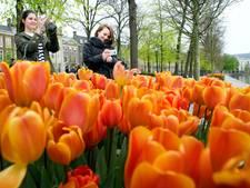 Islamitische jongeren delen oranje tulpen uit
