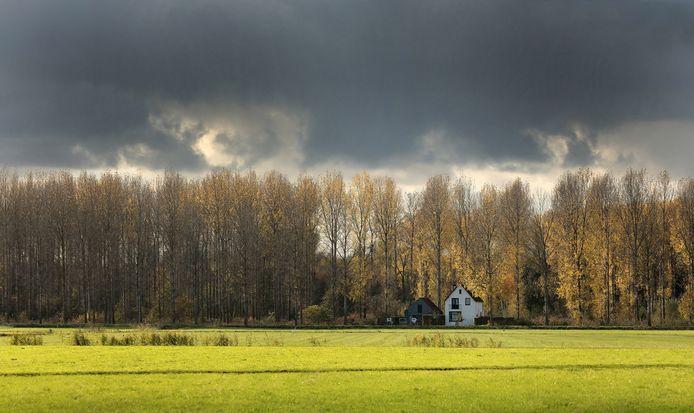 Populieren in De Elzen lichten op in de herfstzon.