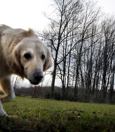 Westervoort speurt naar honderd onzichtbare honden