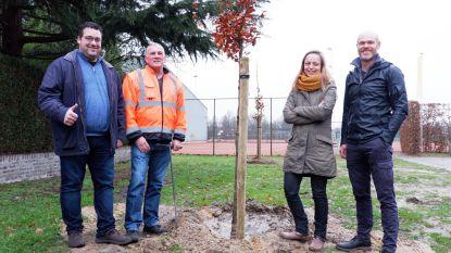 Eerste 35 klimaatbomen geplant