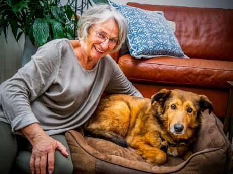 Bizar! Hond zwerft week lang door regio en keert daarna doodleuk terug naar bazinnetje