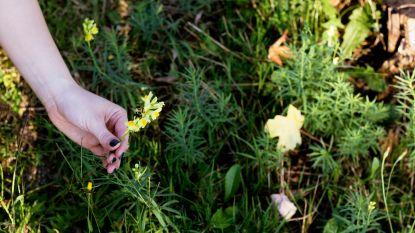 Week van de Bij: 9 tips om van je tuin of terras een heerlijk oord voor bijen te maken