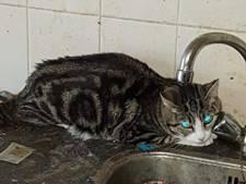 Vijftien verwaarloosde katten gered uit vervuilde woning in Goor