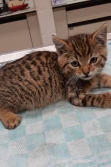 Kitten Bartje: barstjes in schedel duiden op mishandeling