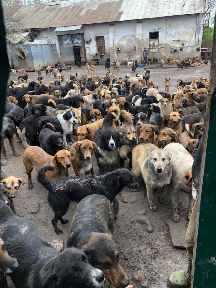 De hondjes in Sasha's Shelter