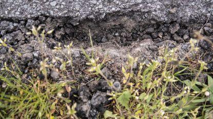 """Politie Het Houtsche waarschuwt voor valse asfalteerders: """"Verwittig ons!"""""""