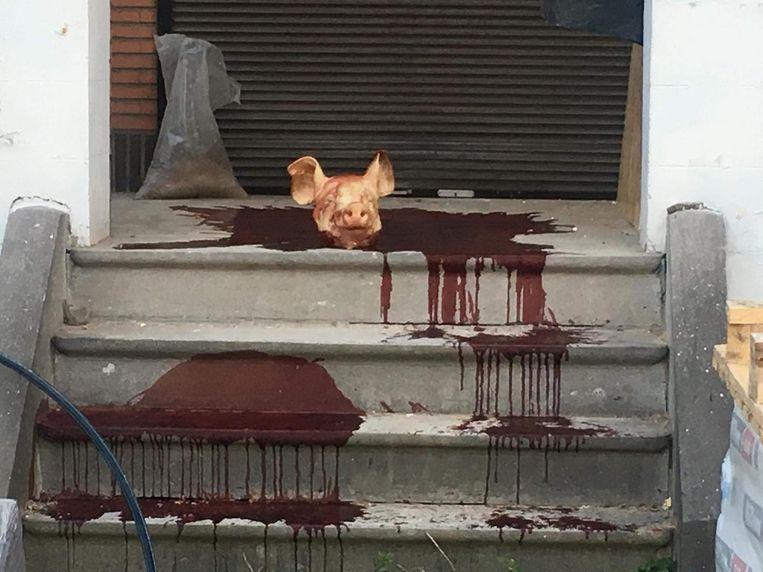 De varkenskop met bloed dat voor de ingang van het centrum werd neergelegd.