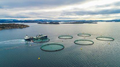Acht miljoen Noorse kweekzalmen in week tijd gedood door algen