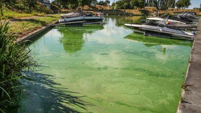 Opnieuw oppomp- en recreatieverbod door blauwalgen op kanaal in Izegem