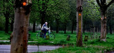 Minder zieke essen en kastanjes in Dordrecht