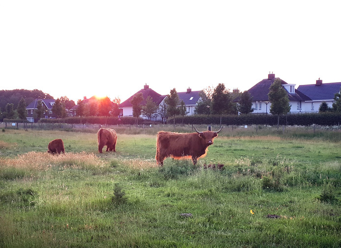 Zondagavond lag Hooglandertje in het gras voor de moeder op de Roosendaalse Landerije.
