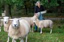 Agnes de Bruijn met haar schapen in Wenum-Wiesel.