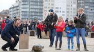 Paparazzi, maar dan voor zeehonden