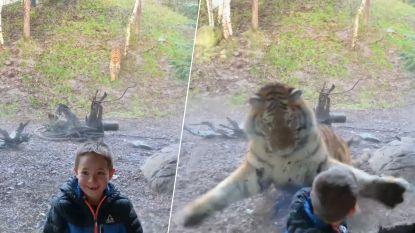 Het moment waarop tijger kind aanvalt in zoo