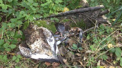 """""""Bornemse jagers vergiftigen roofvogels"""""""