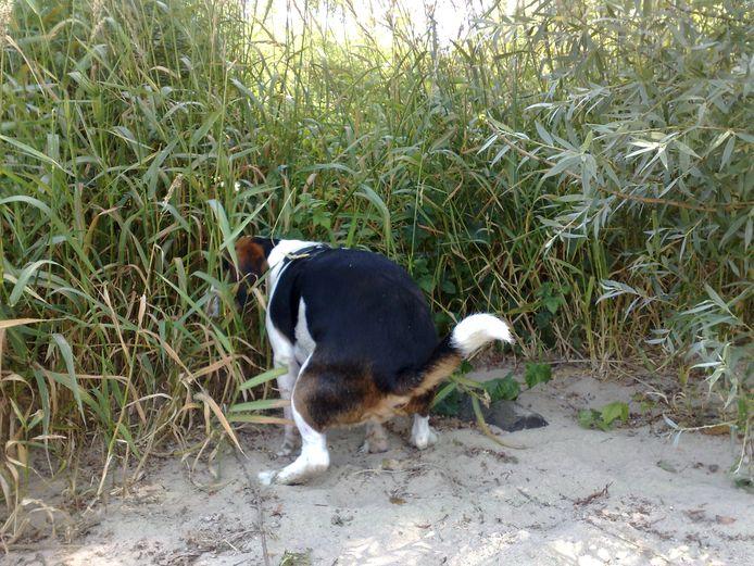 stockpzc stockadr hondenpoep uitlaten hond hondenuitlaatplaats