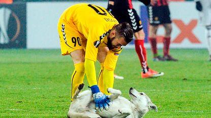 VIDEO: Speelse hond verstoort Europa League-duel van ex-coach Club Brugge