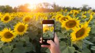 Shazam voor natuurliefhebbers: deze app herkent bloemen, planten en insecten