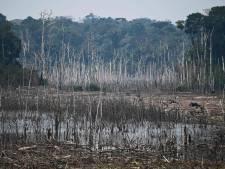 La déforestation a augmenté de 150% durant la pandémie de Covid-19