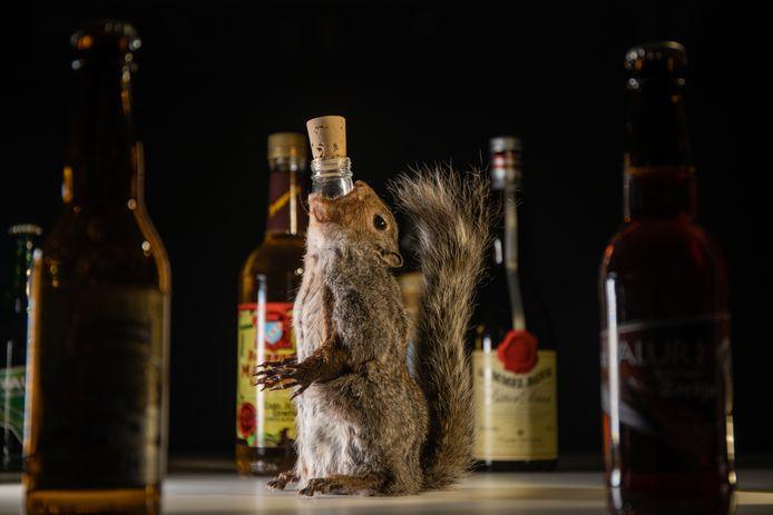 """Le """"vin de caca"""" est présenté dans le cadre de l'exposition sur les alcools répugnants du musée de la nourriture dégoûtante de Malmö."""