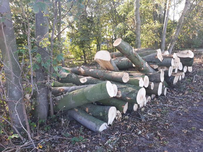 Langs de weg liggen veel stapels omgehakte bomen.