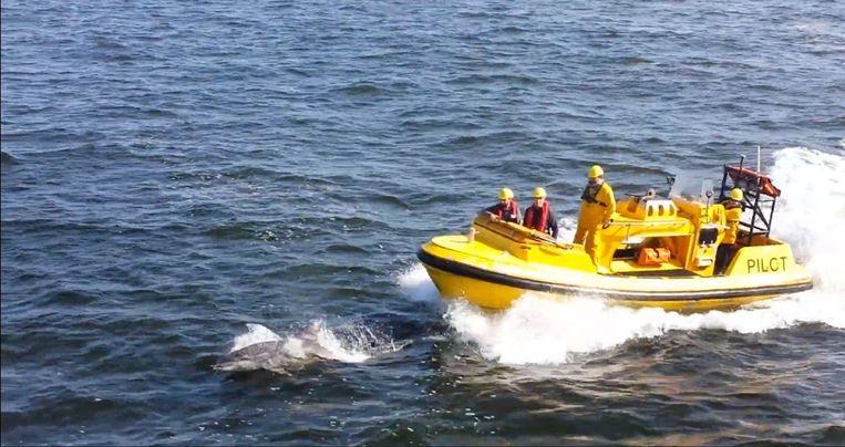 De tuimelaar zwemt voor vaartuig De Wandelaar.