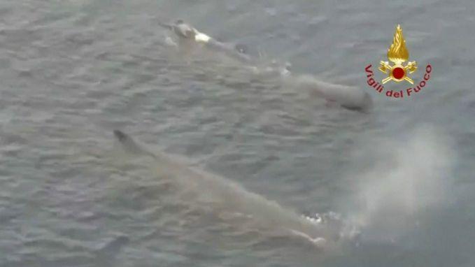 Plots walvissen gespot voor de kust van Italië