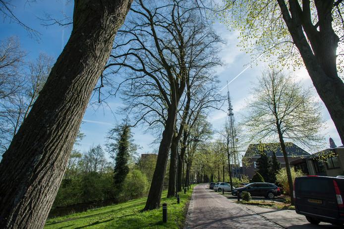 Moet er iets gedaan worden aan de Lindebomen op Winterdijk? Omwonenden vinden van wel, maar de gemeente is voorzichtig met dit karakterisiek groen.
