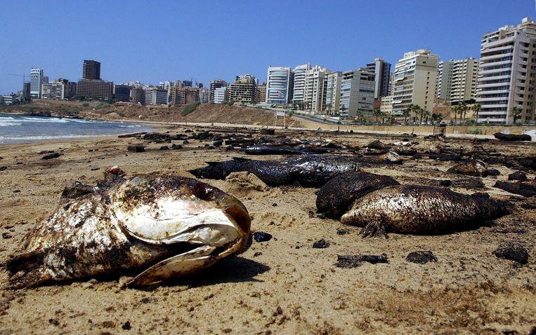 Duizenden met olie besmeurde vissen op het strand van Libanon in 2006. Beeld epa