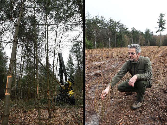 ,,Een vitaal bos heeft nieuwe bomen nodig. Niet alleen in leeftijd, maar ook met nieuwe soorten'', zegt boswachter Gert van Duuren.